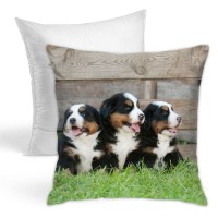 Three Bernese Mountain Dog. Throw Pillow Covers for Sofa Bedroom , Can be used in recreational vehicle 45cm x 45cm